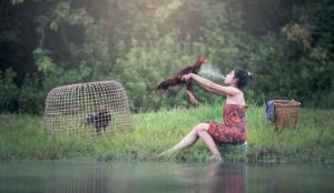 Bật mí cách nuôi gà chiến khỏe từ các dân chơi chuyên nghiệp